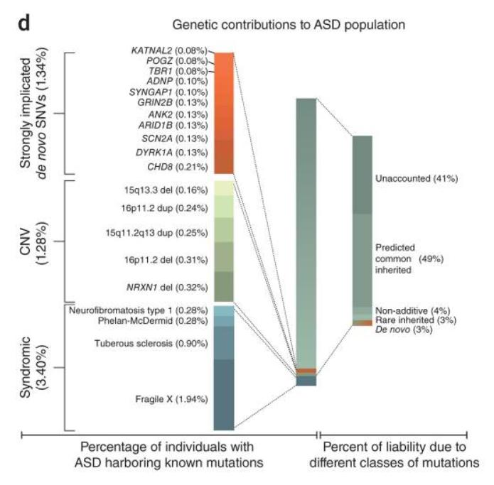 自閉症スペクトラム(アスペルガー症候群)と遺伝子
