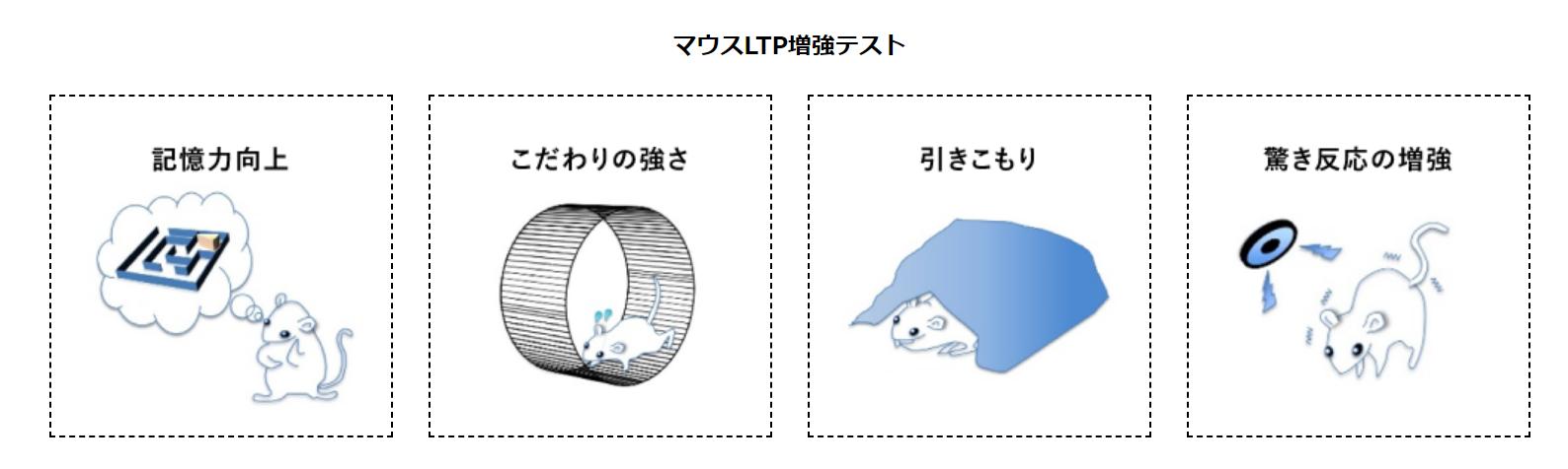 マウスLTP増強テスト