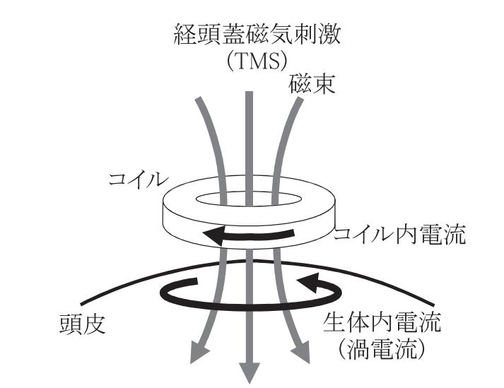 経頭蓋磁気刺激(TMS)の原理