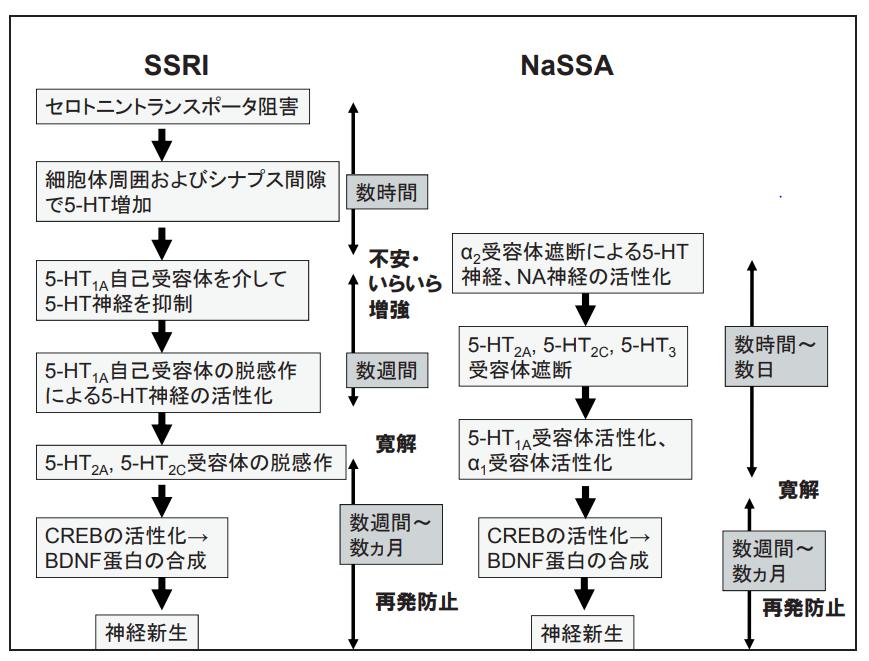 SSRIとNaSSAの比較