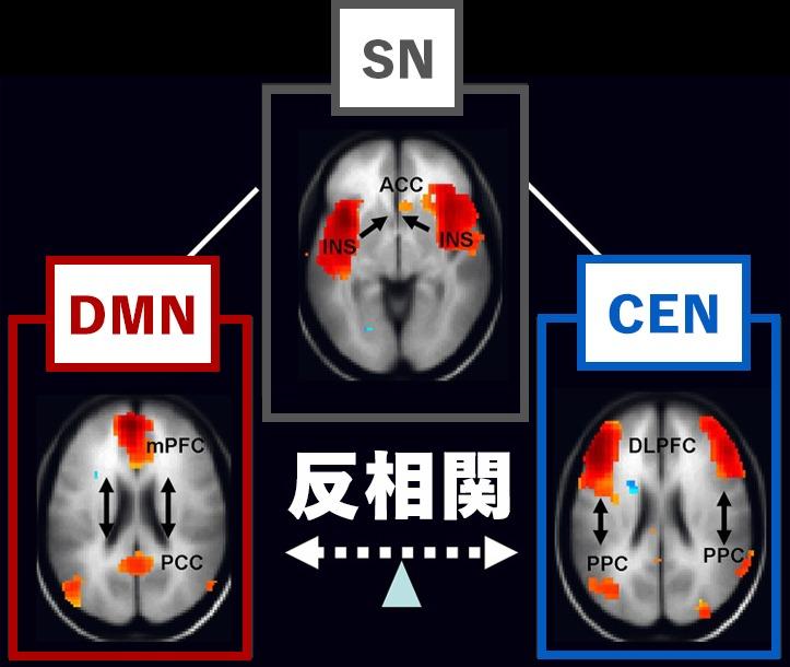 DMNとCENのfMRI